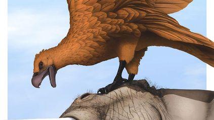 Recreación gráfica ilustrativa de un teratornis alimentándose del cadáver de un notiomastodon.