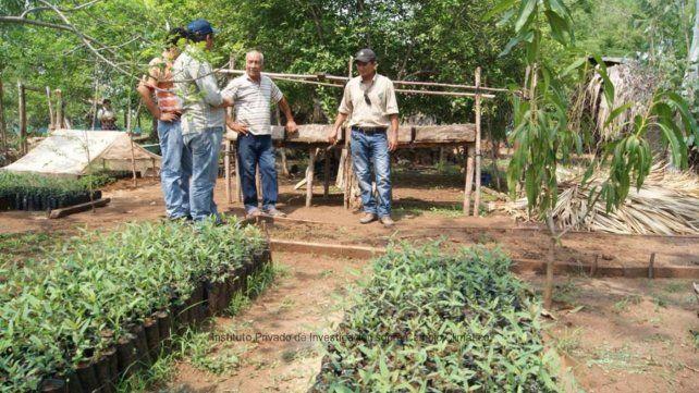 Crean un vivero municipal en la localidad de Firmat