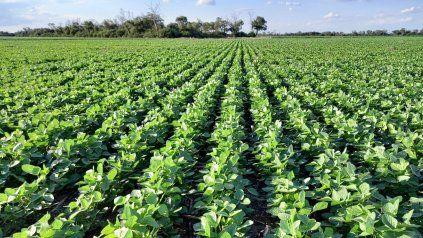 En la primera semana se sembraron 130 mil hectáreas de soja en la región.
