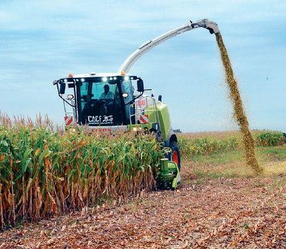 Los rindes del maíz para este ciclo son mejores de los esperados.