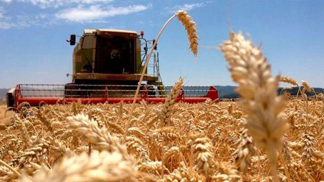 El precio de la soja se recupera y suben el maíz y el trigo