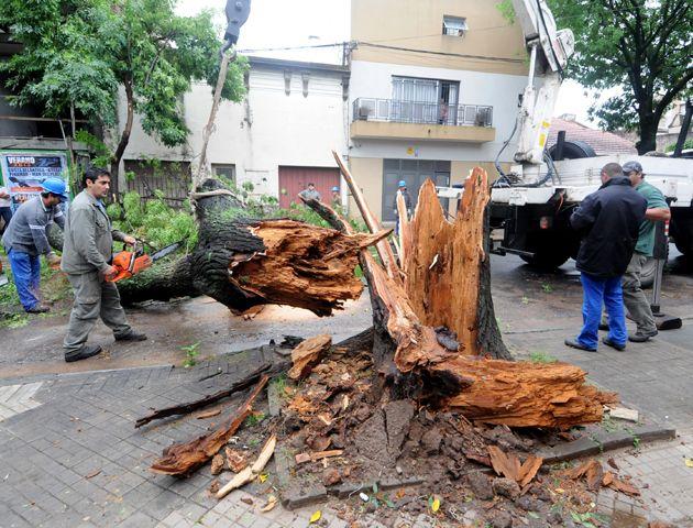 Las fuertes ráfagas de viento causaron la caída de un gigantesco árbol en la calle Cerrito y España. (Foto: S. Toriggino)