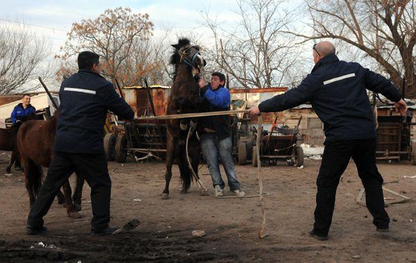 Agentes de Contro Urbano llevaron los caballos a los corralones municipales. (Foto: M. Sarlo)