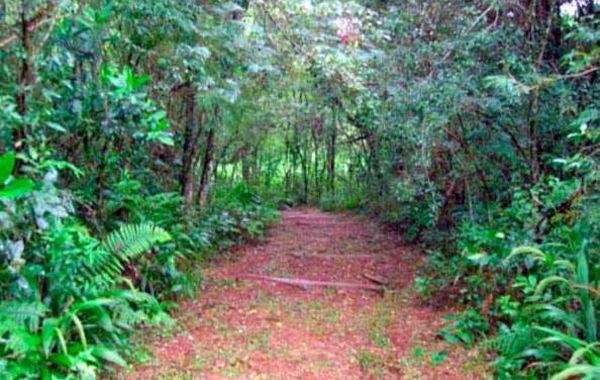 El sendero donde fue encontrado el niño salvajemente agredido.