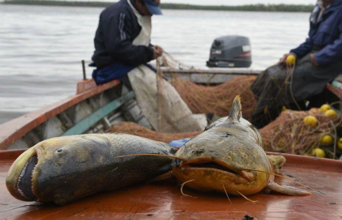 Preocupación por la escasez de peces en el río Paraná por la pesca industrial indiscriminada