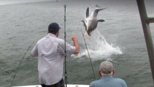 El enorme susto de un grupo pescadores ante la aparición de un tiburón blanco