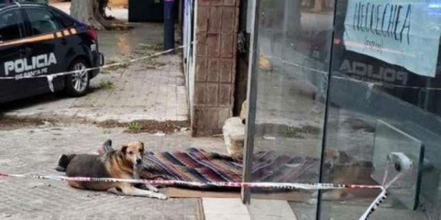 Quién era el indigente que murió en República de la Sexta con su fiel perro al lado