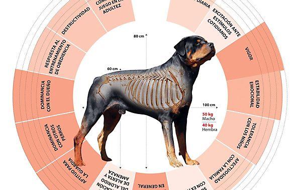 Los ataques de perros de razas gran porte preocupan a la población.