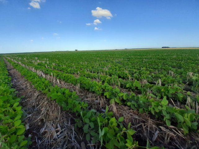 La soja en Chicago subió casi 40% durante el año 2020.
