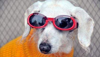 Chanel, la perra más vieja del mundo, murió a los 21 años
