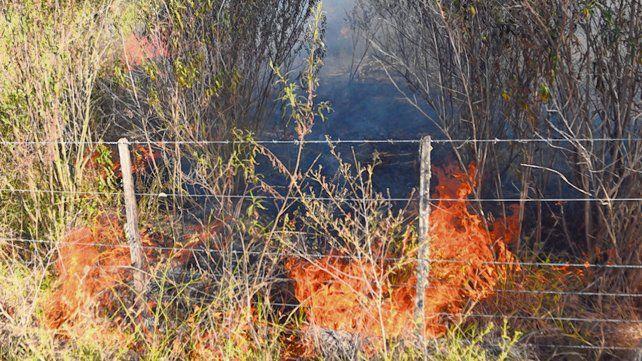 Amenaza latente. Las llamas afectaron entre 8 y 10 mil hectáreas de los humedales.