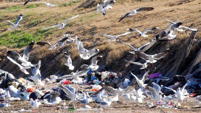 Aves en la zona del río cerca de Rosario.