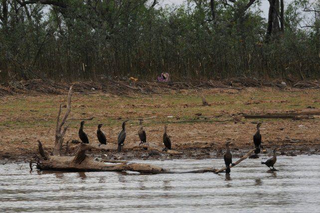 Especialistas piden medidas adecuadas de prevención en un contexto extraordinario de sequía