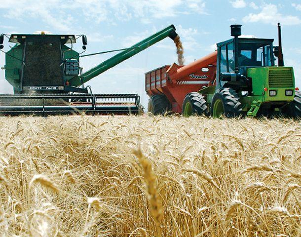 Los pronósticos de la Bolsa porteña indican que se sembrarán 300 mil hectáreas menos que en 2014/15. (Foto: M. Sarlo)