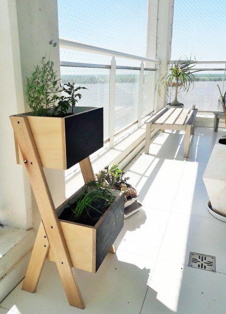 ¿Cómo cultivar plantas aromáticas?