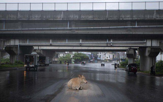 Una vaca se refugia de la lluvia debajo de un paso elevado en una calle generalmente abarrotada durante un cierre impuesto para frenar la propagación del coronavirus en Colombo
