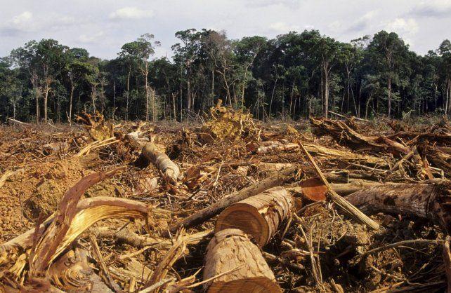 Deforestación. Estamos obligados a que el campo sea una actividad económica sustentable