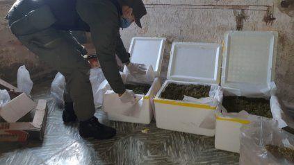 Gendarmería secuestró marihuana en un campo cercano a Venado Tuerto