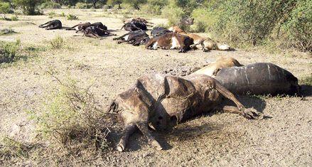 En el norte provincial los animales ya mueren de sed por la sequía