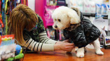 En los salones de mascotas se multiplica la oferta de indumentarias y accesorios para perros y gatos.