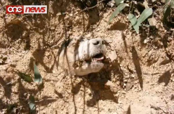 Una perra recibió 40 balazos, la enterraron viva e igual sobrevivió (video y fotos)