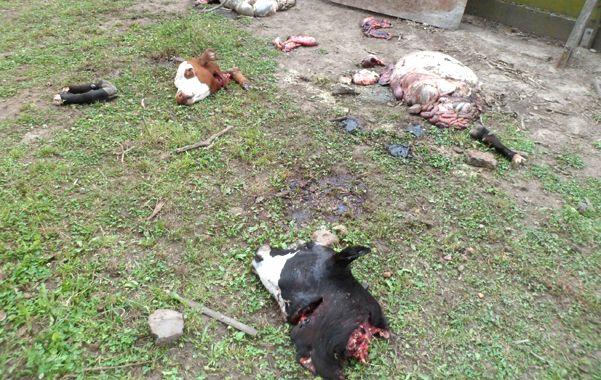 Espanto. Animales decapitados y eviscerados