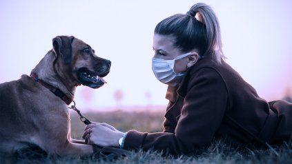 El cuidado de la salud animal es clave para evitar posibles epidemias.