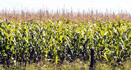 Agro: los grupos Crea lanzaron el alerta naranja por la sequía