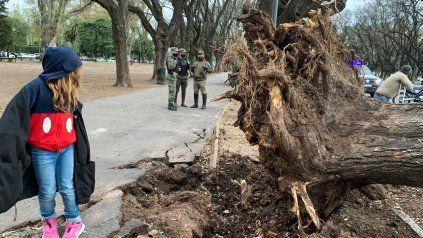 En Rosario hubo ráfagas de más de 80 kilómetros por hora y cayeron 70 árboles