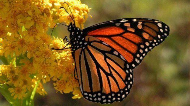 Lo que me enseñó una mariposa