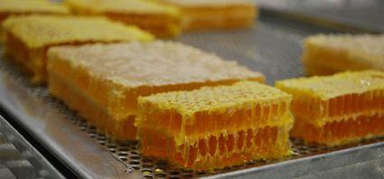 Funciona en Carcarañá la primera planta de miel en panal de Sudamérica