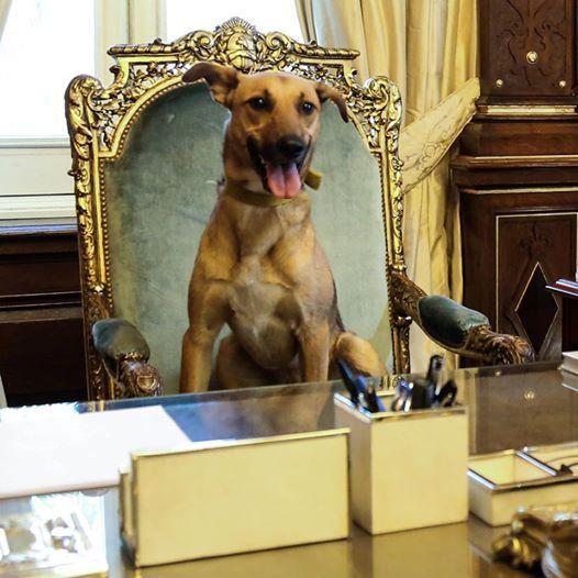 """Balcarce. """"Es el primer perro de la historia argentina que llega a este lugar""""."""