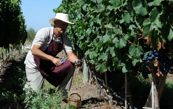 Crisis. La vitivinicultura es una de las actividades golpeadas. Viñateros pidieron declarar la emergencia.
