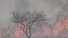 la pastoral social reafirma el compromiso contra el ecocidio en los humedales