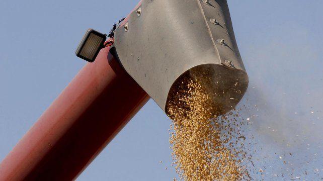 El avance del poroto también aportó firmeza el nuevo incremento del aceite de soja.
