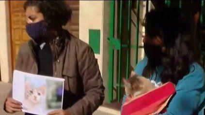 Vecinos de los barrios Abasto y República de la Sexta denuncian ataques a gatos