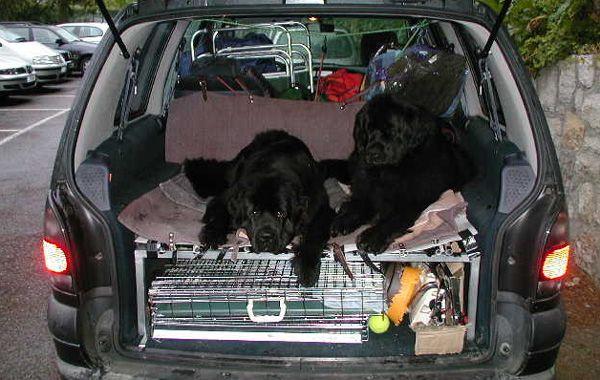 La mujer iba con su pequeño perro cuando dos terranova salían a la calle para subir a una camioneta y la atropellaron arrojándola al suelo. (Foto archivo)