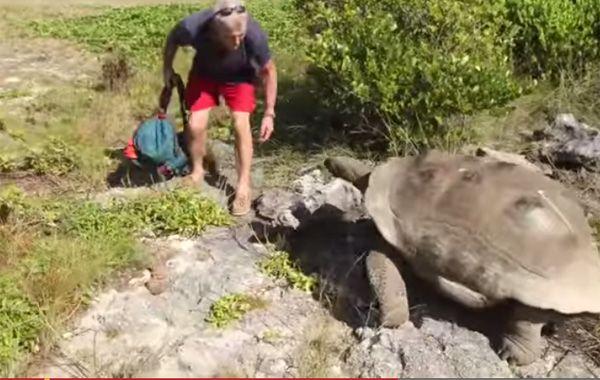 La tortuga se le fue encima a Paul Rose