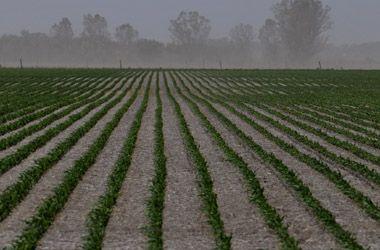 Agro: cómo le irá al campo en 2010, tras la crisis, la sequía y el conflicto político