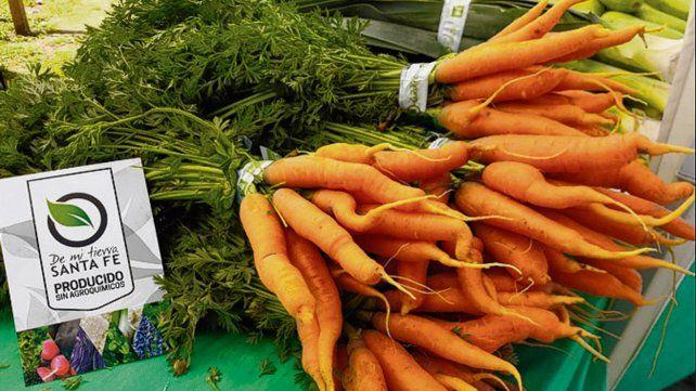 Salud vegetal. Cultivan hortalizas libres de agroquímicos.