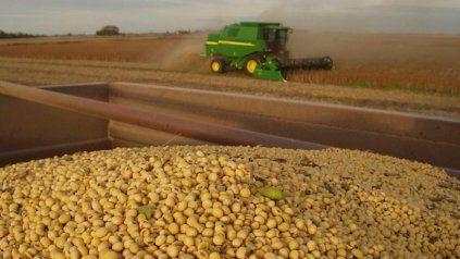 A Granel: asamblea AFA e inicio de cosecha de maíz para ASA