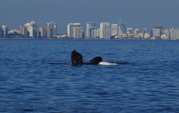 Las ballenas son un espectáculo en sí mismo.