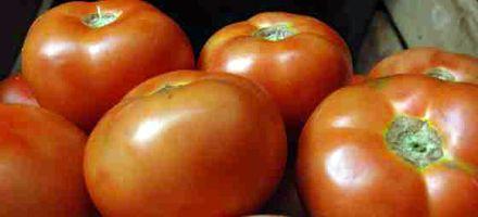 Quinteros de Santa Fe pasan del tomate a la soja