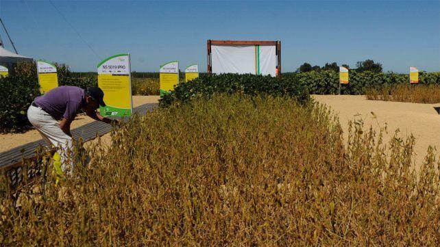 La soja, el trigo y el maíz registran nuevas alzas en el Mercado de Chicago
