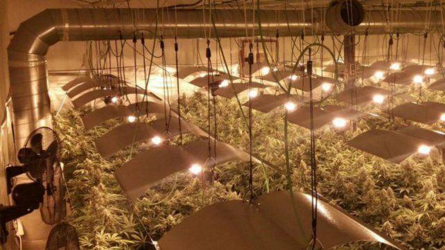 Un pueblo español se quedó sin luz por varias plantaciones de marihuana