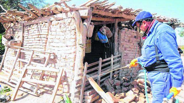 El Chagas sigue imbatible: un chico infectado nace cada siete horas en el país