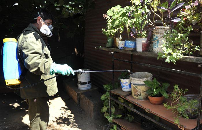 Se trabaja intensamente con las fumigaciones y en la eliminación de los criaderos. (Foto: Virginia Benedetto / La Capital)