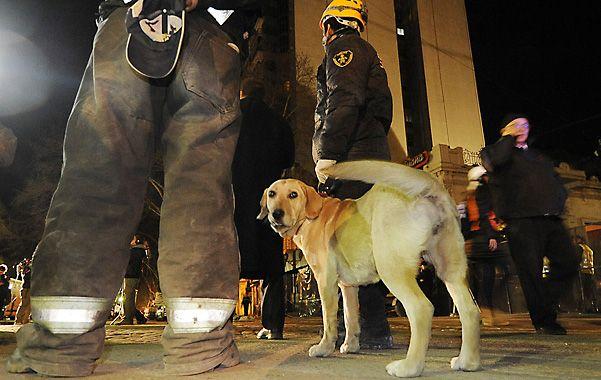 """Precisión. Los especialistas aseguran que """"no hay elemento tecnológico que iguale la capacidad de búsqueda de los perros"""". (Foto: F. Guillén)"""