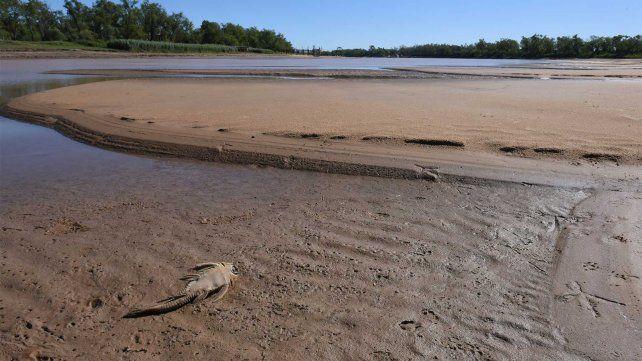 La provincia prevé la proteger nuevas áreas en el delta y las islas del Paraná