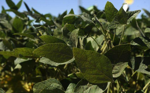 Disputa. Monsanto exige firmar un contrato para la venta de la RR2 Pro.